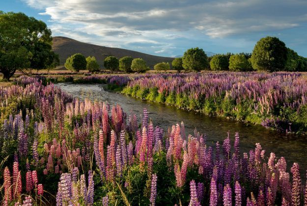 Inspired New Zealand Tours